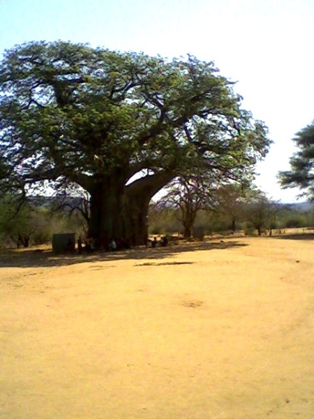 Siachilaba Baobab